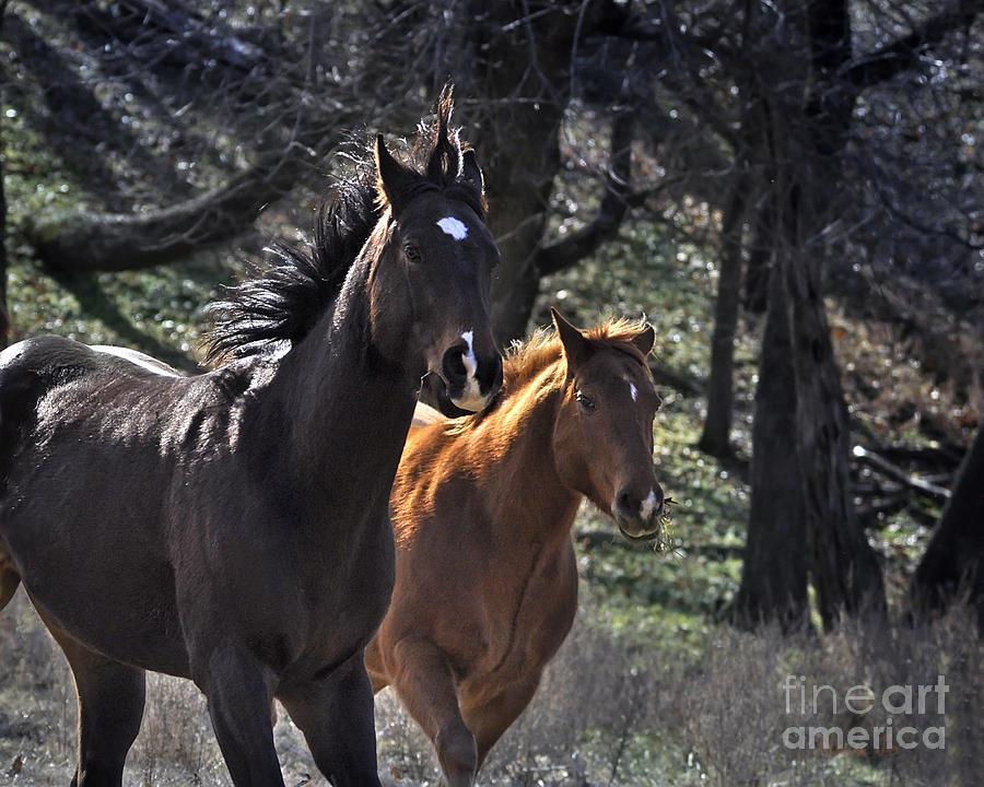 Nature Photograph - Running Free by Nava Thompson