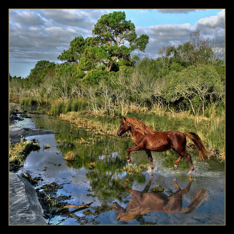 Assateague Island Photograph - Running Free by Tammy Thompson