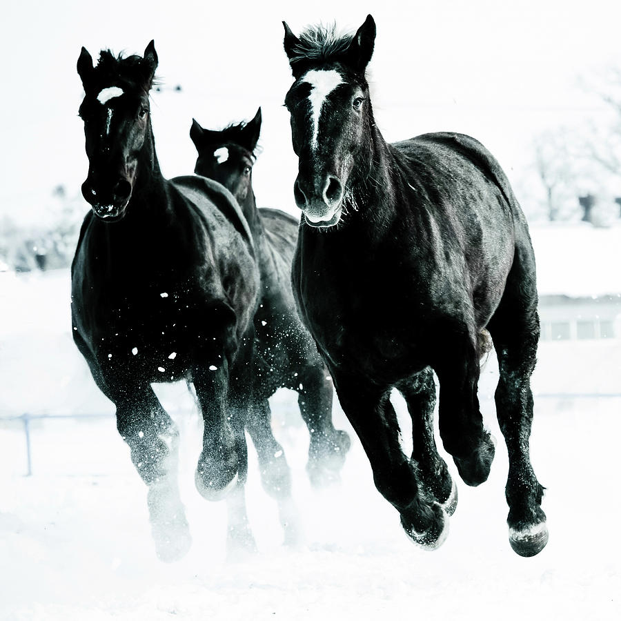 Running Horses Photograph by Makienis Photo