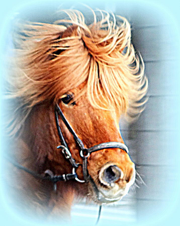 Horse Photograph - Running In The Fields, Waving My Golden Mane  by Hilde Widerberg