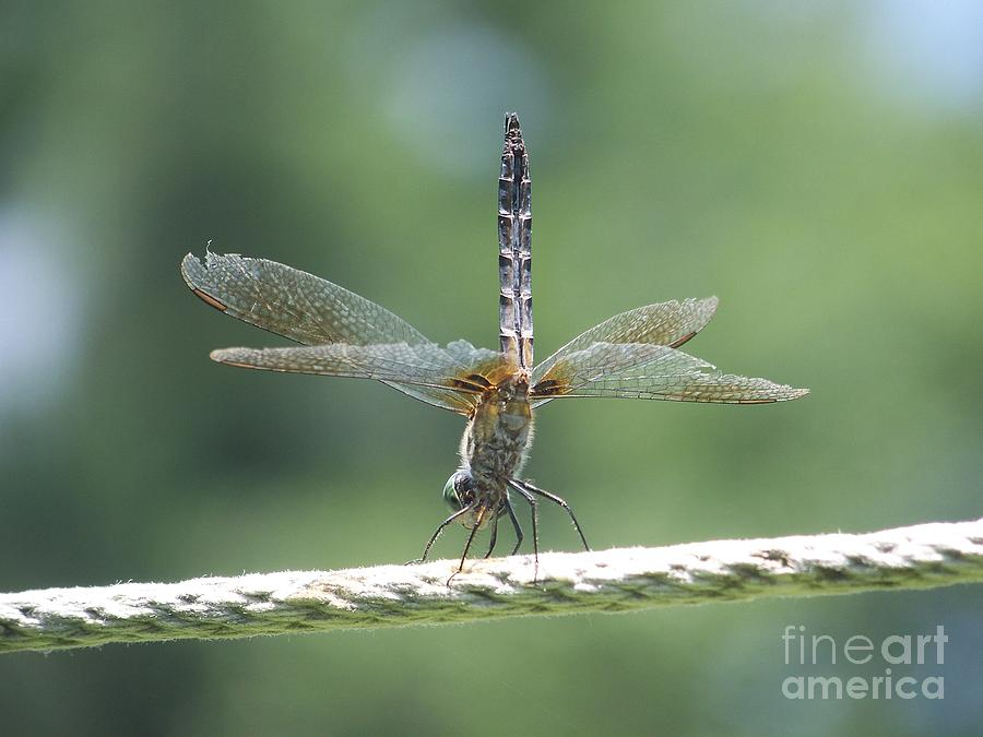 Dragonfly Photograph - Running On All Six by Eunice Miller