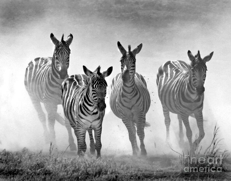 running Zebra by Bobbie Turner