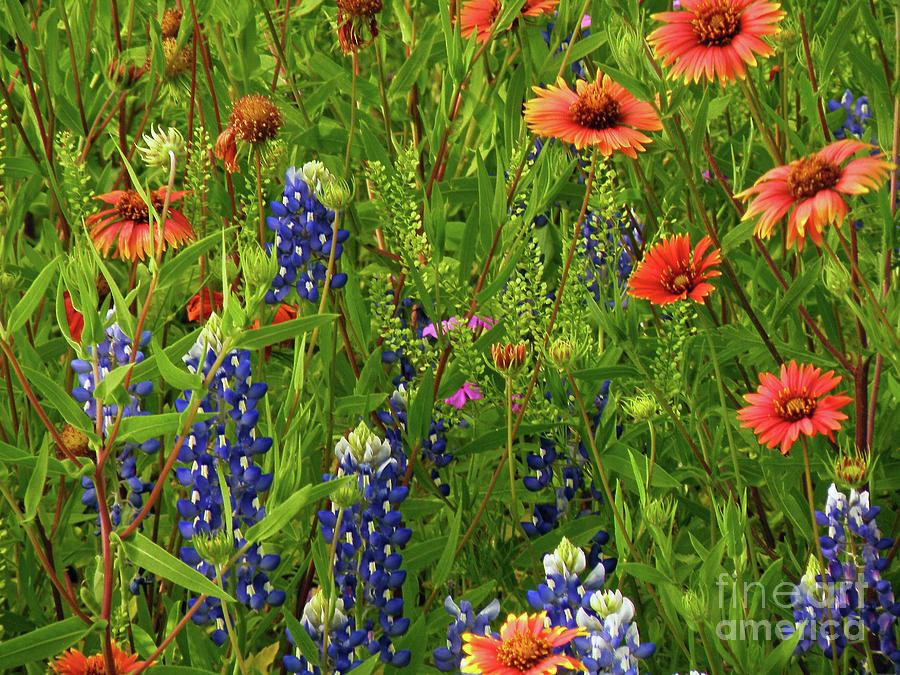 Wildflowers Photograph - Rural Color by Joe Jake Pratt