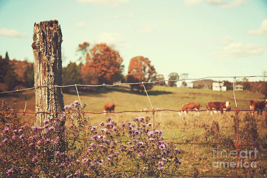Agriculture Photograph - Rural Country Scene by Sandra Cunningham