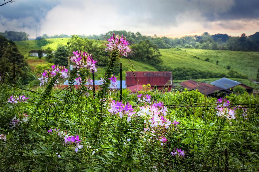 Appalachia Photograph - Rural Garden by Debra and Dave Vanderlaan