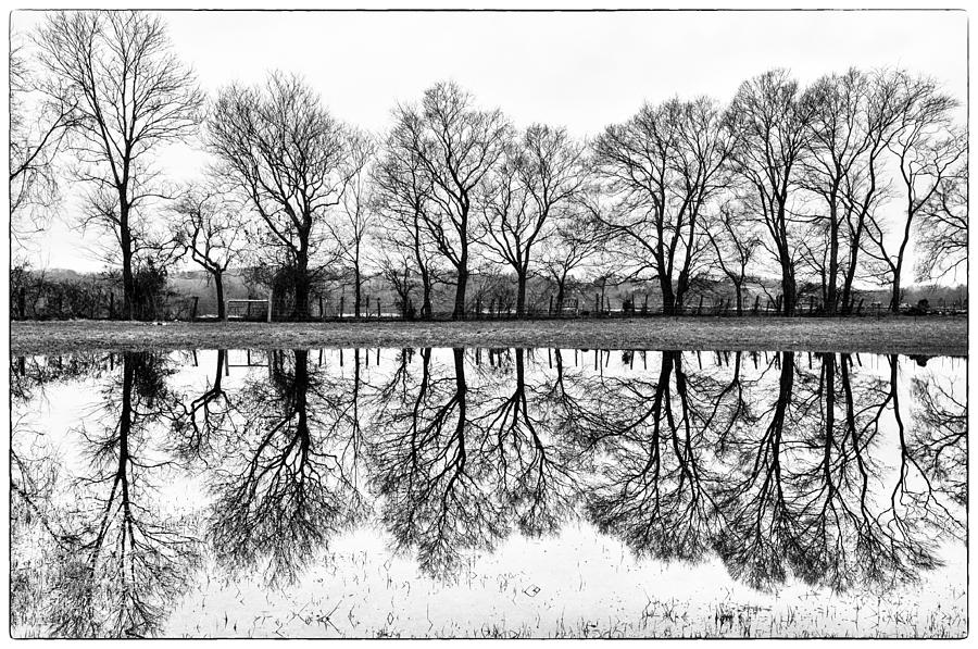 Trees Photograph - Rural Reflections by Ron Plasencia