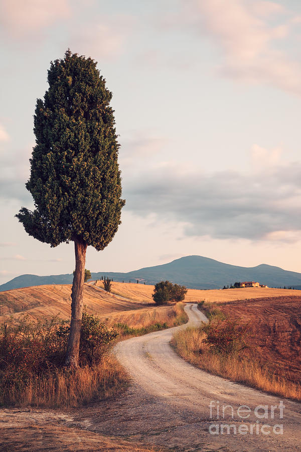 Farmhouse Photograph - Rural Road With Cypress Tree In Tuscany Italy by Matteo Colombo