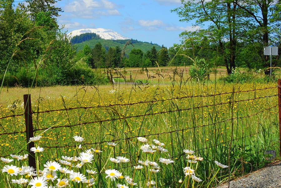 Landscape Photograph - Rural Springtime  by Mamie Gunning