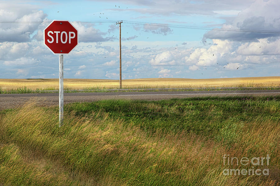 Attention Photograph - Rural Stop Sign On The Prairies  by Sandra Cunningham