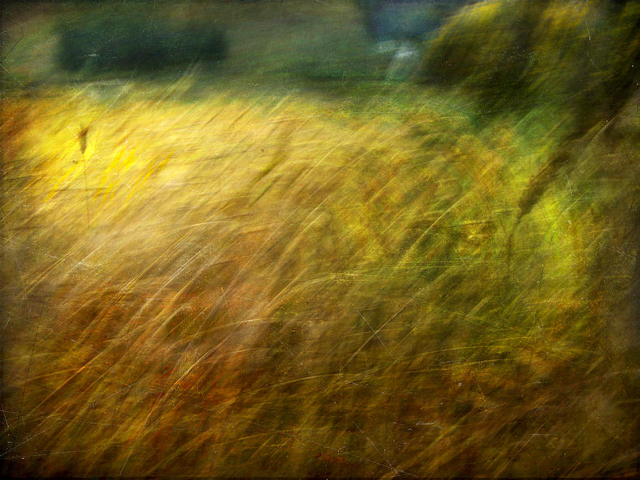 Digital Photograph - Ruralscape #8. Field And Wind by Alfredo Gonzalez