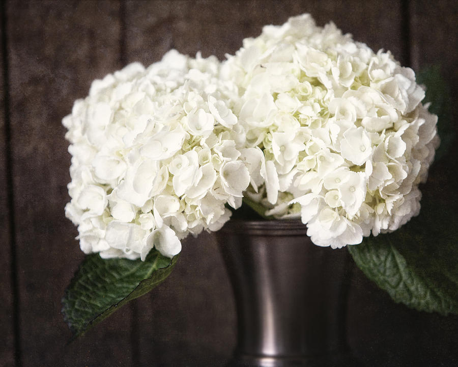 Flower Photograph - Rustic Hydrangea In A Bronze Vase With Barnwood by Lisa Russo