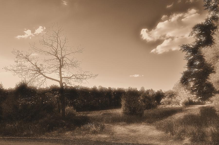Sepia Tone Photograph - Rustic by Thomas  MacPherson Jr