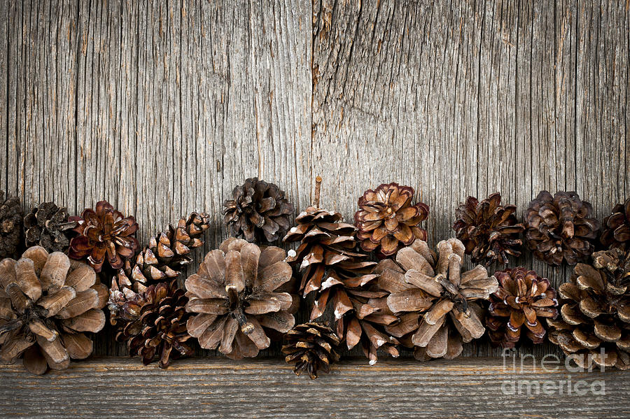 Wood Photograph - Rustic Wood With Pine Cones by Elena Elisseeva