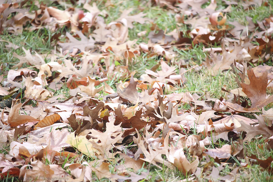 Leaves Photograph - Rustling In The Wind by Stacie  Goodloe