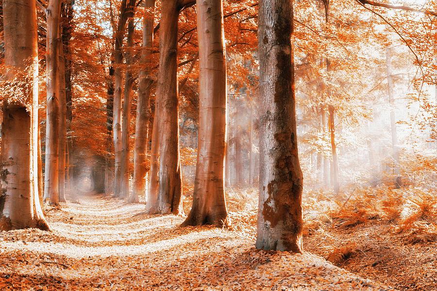 Rusty Autumn Photograph by Bob Van Den Berg Photography