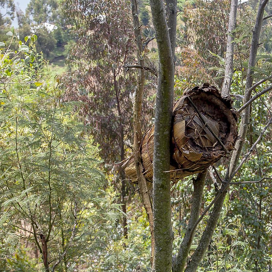Rwanda Photograph - Rwandan Beehive by Paul Weaver
