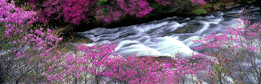 Color Image Photograph - Ryuzu Falls Tochigi Japan by Panoramic Images