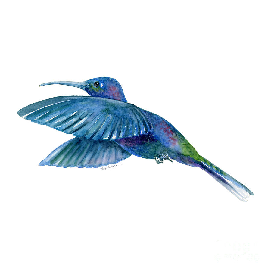 Sabrewing Hummingbird Painting