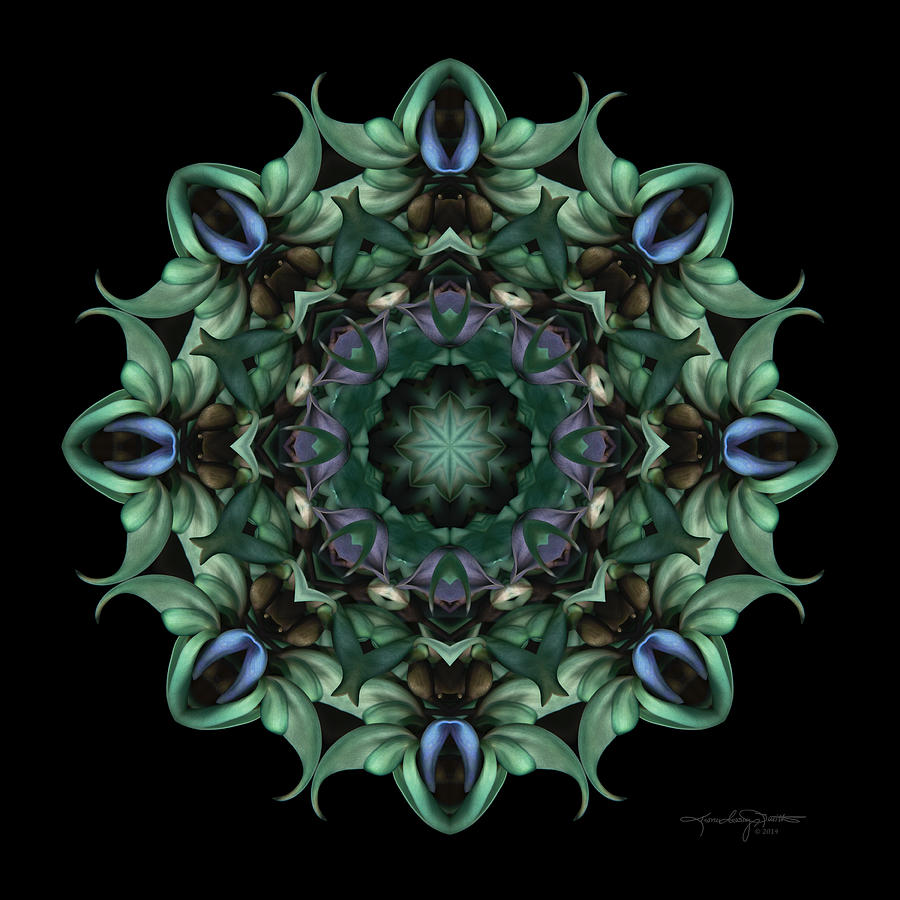 Flower Mandala Photograph - Sacred Aspects - Divine Feminine by Karen Casey-Smith