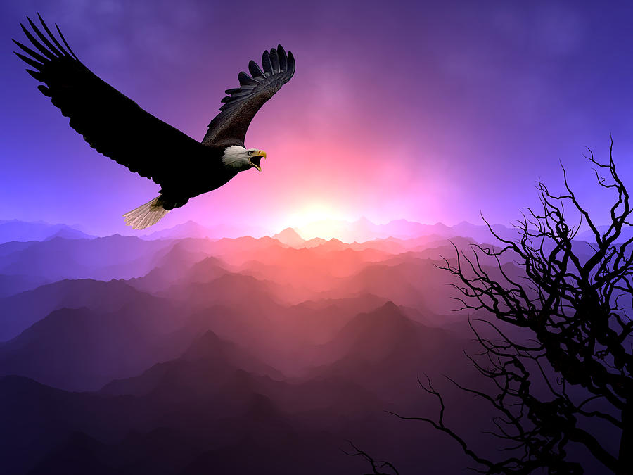 Eagle Digital Art - Sacred Spaces by Andreas Thust