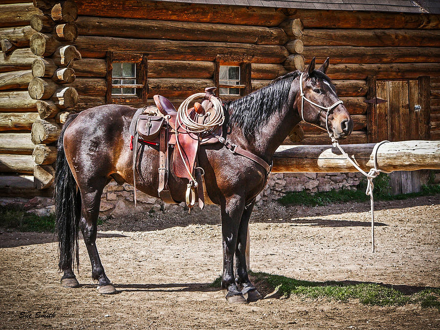 Montana Photograph - Saddled And Waiting by Sue Smith