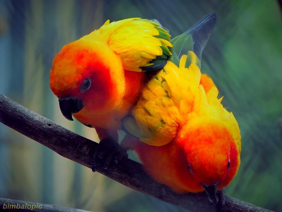Bird Photograph - Safari Birds by Sarode Nimmanwattana