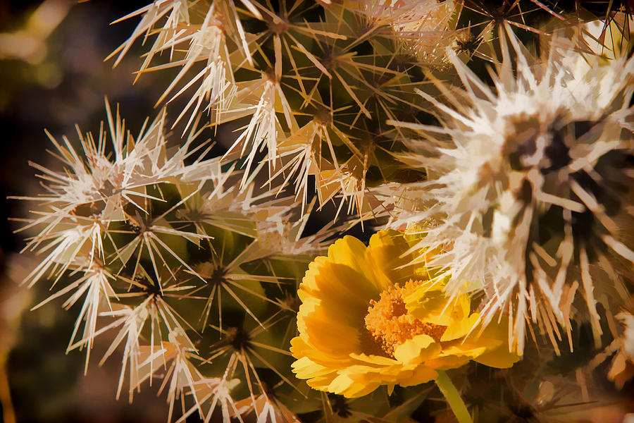 Cactus Photograph - Safe Here by Scott Campbell