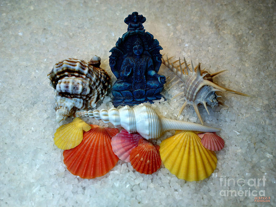Sea Photograph - Safeguard Symbol Seashells by Hanza Turgul