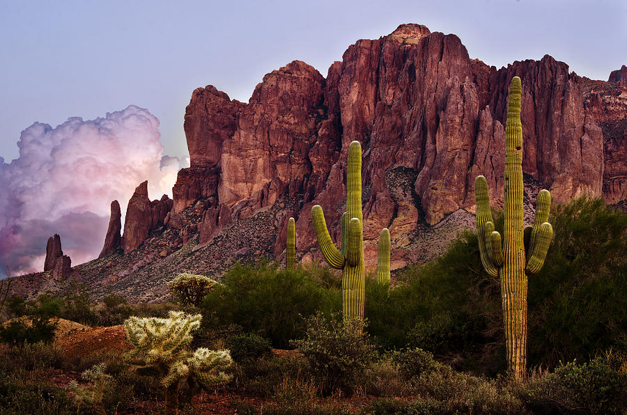 Saguaro Cactus and the Superstition Mountains by Dave Dilli