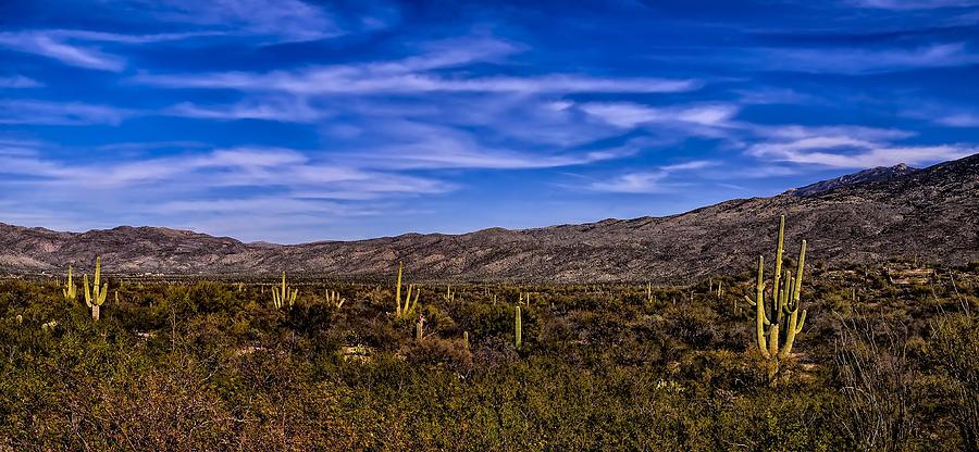 Saguaro Afternoon No.1 Photograph