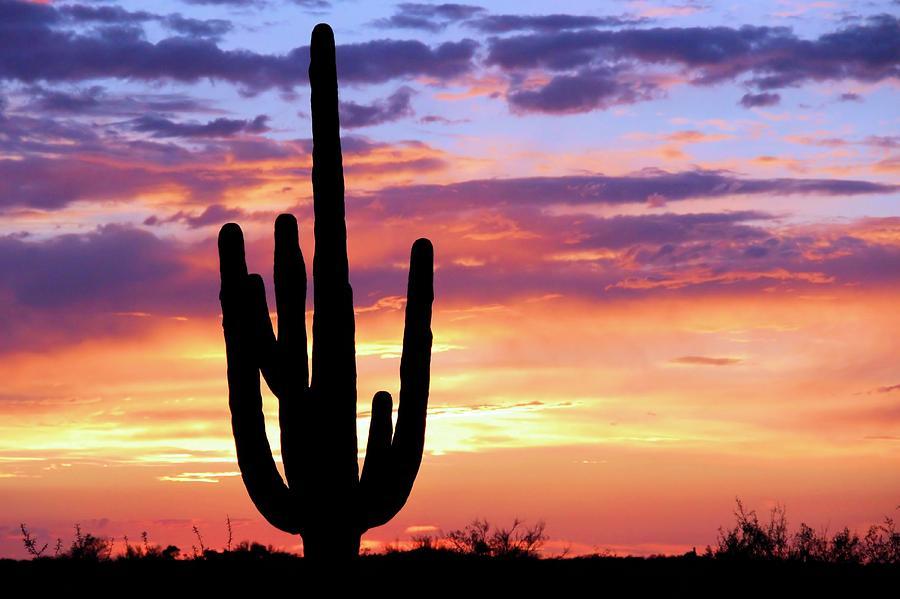 Saguaro Photograph - Saguaro At Sunset by Elizabeth Budd