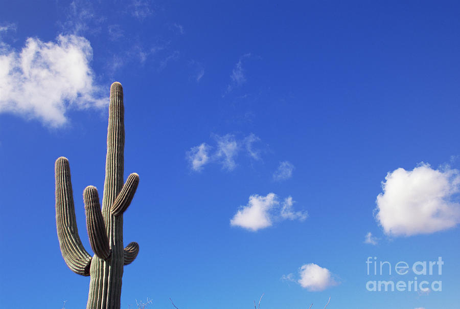 Blue Sky, Saguaro  and Clouds Photograph by Yva Momatiuk and John Eastcott
