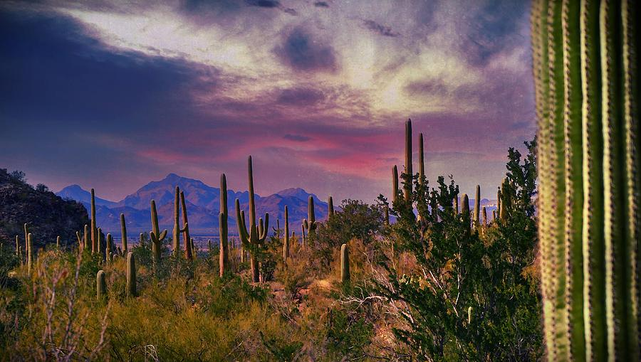 Saguaro National Forest Tucson Photograph By Kathy Jamieson