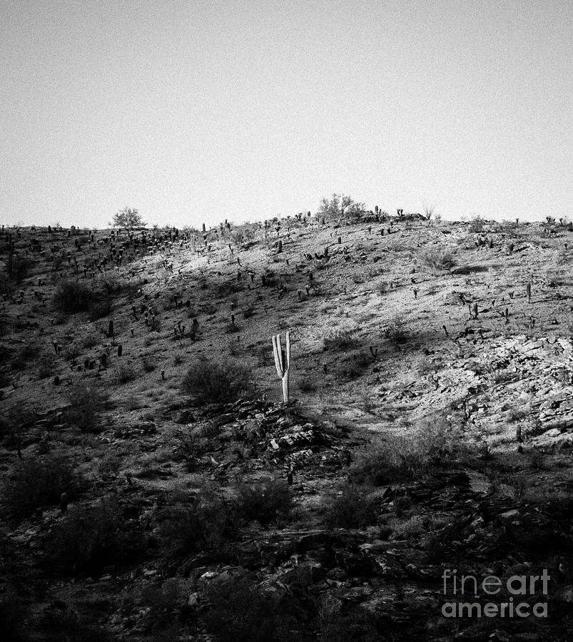 Saguaro Photograph - Saguaro by Patty Descalzi
