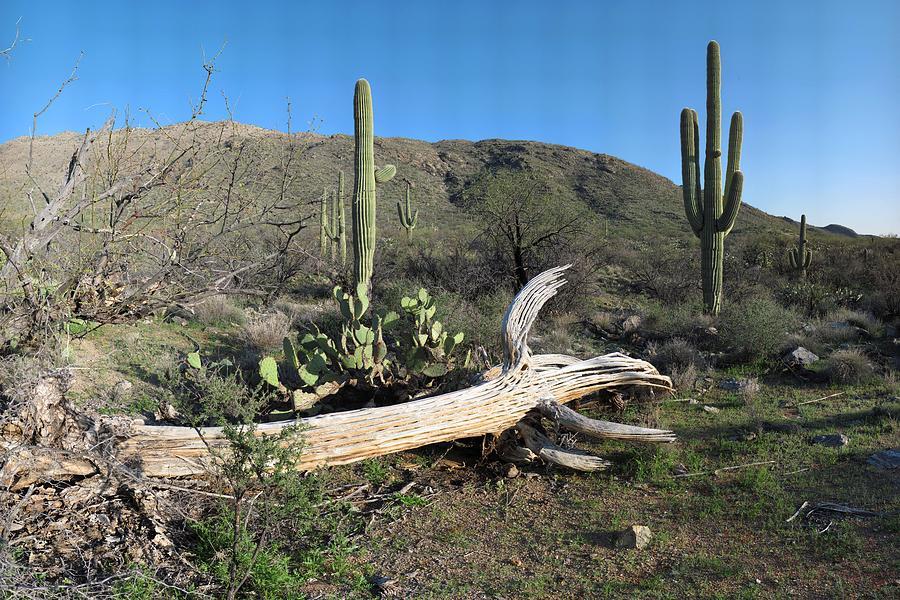 Mountain Photograph - Saguaro Skeleton Saguaro National Park Az  by Brian Lockett