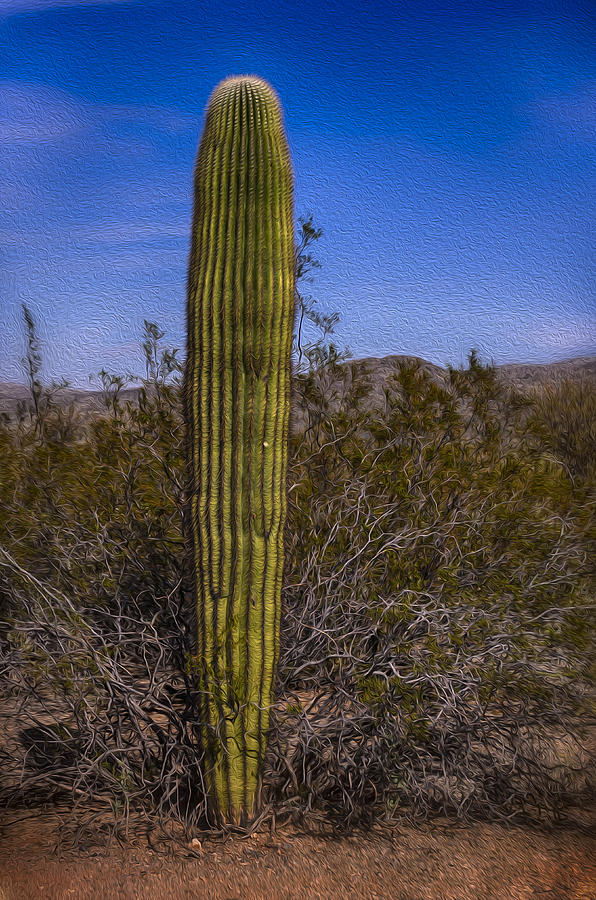 Saguaro Solo No.2 Photograph