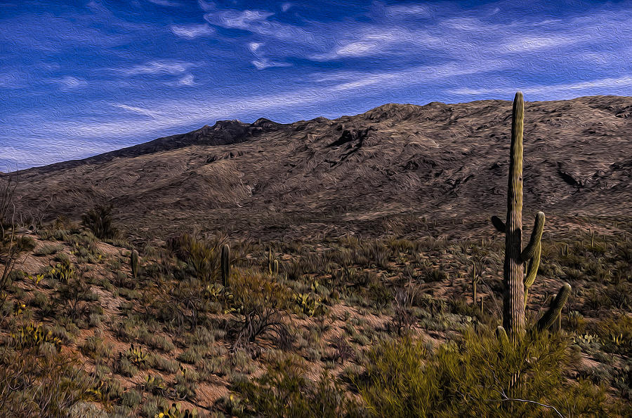 Saguaro View No.2 Photograph