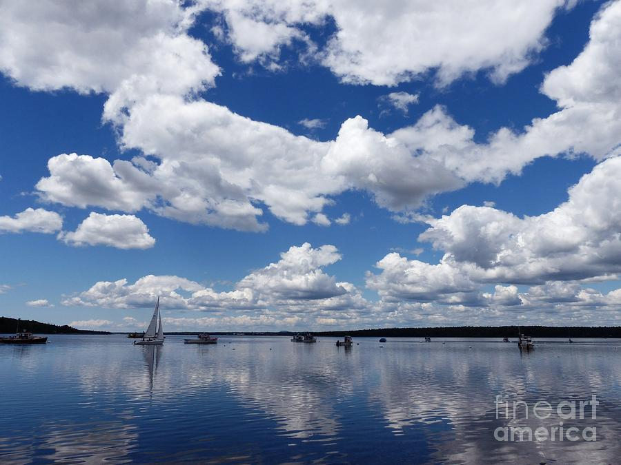 Sailing Through The Harbor by Christine Stack