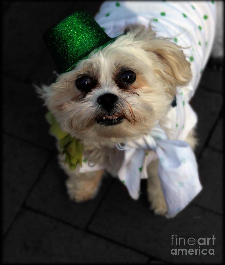 Dog Photograph - Saint Patricks Day  by Steven Digman
