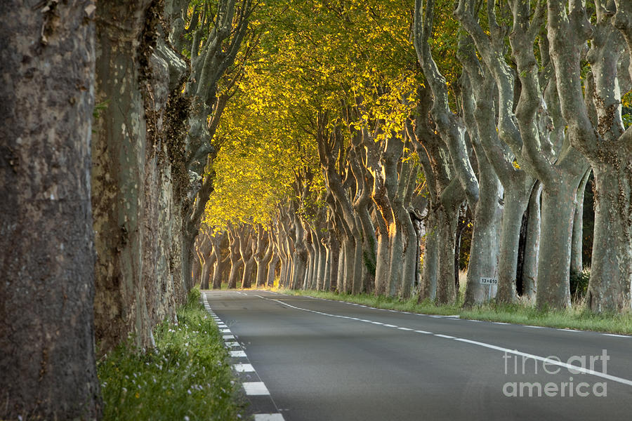 Tree Photograph - Saint Remy Trees by Brian Jannsen