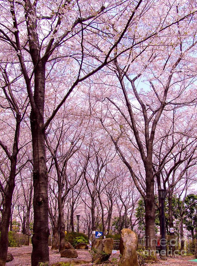 Sakura Tree Photograph - Sakura Tree by Andrea Anderegg