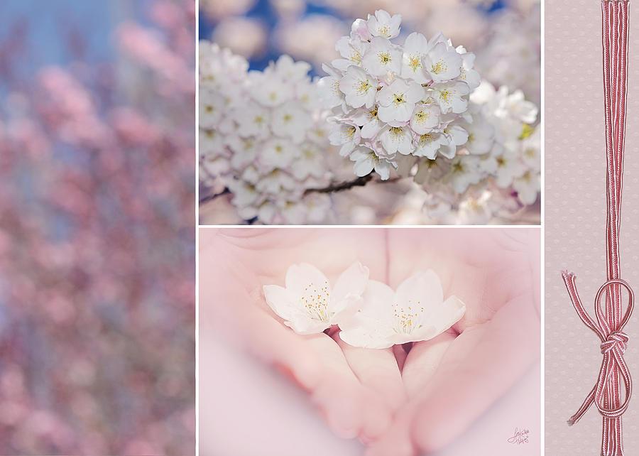 Lisa Knechtel Photograph - Sakura Triptych by Lisa Knechtel