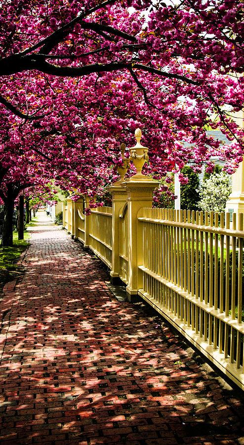 Salem Photograph - Salem Walkway Shrouded By Spring Flowers by Jeff Folger