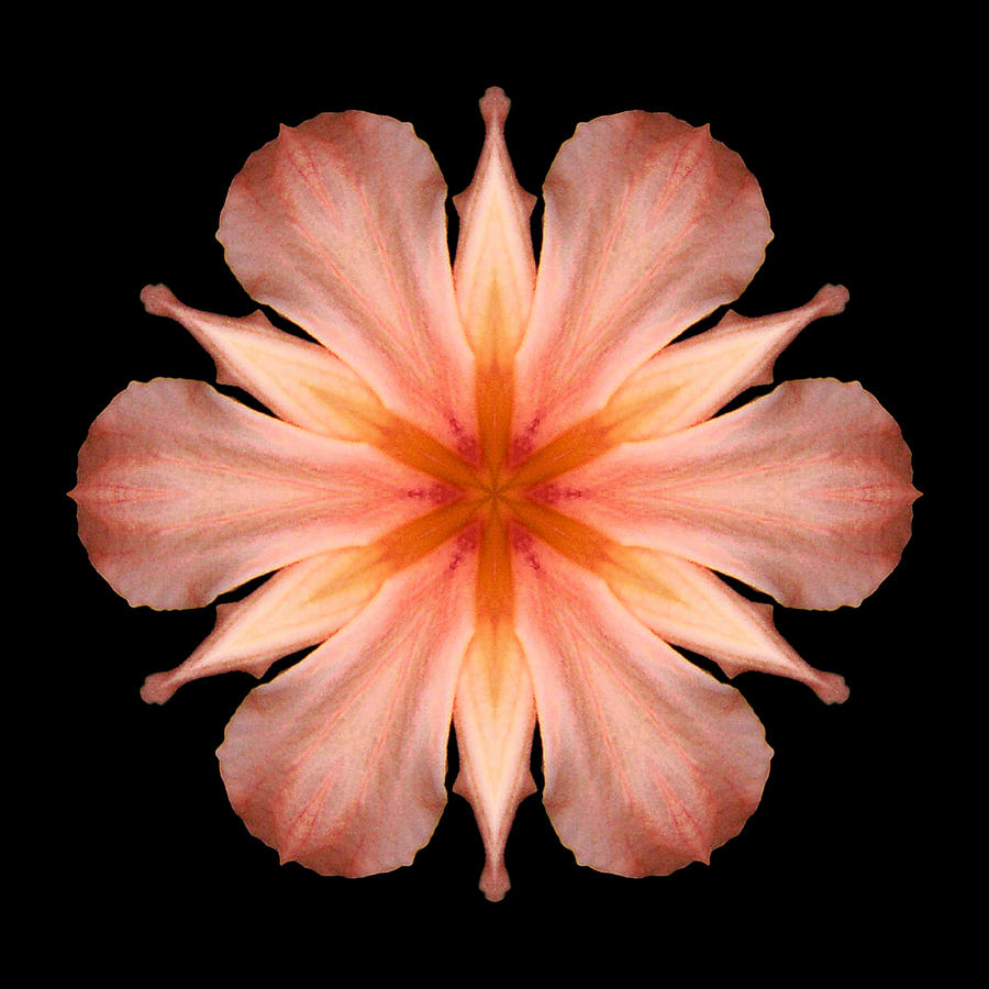 Flower Photograph - Salmon Daylily I Flower Mandala by David J Bookbinder