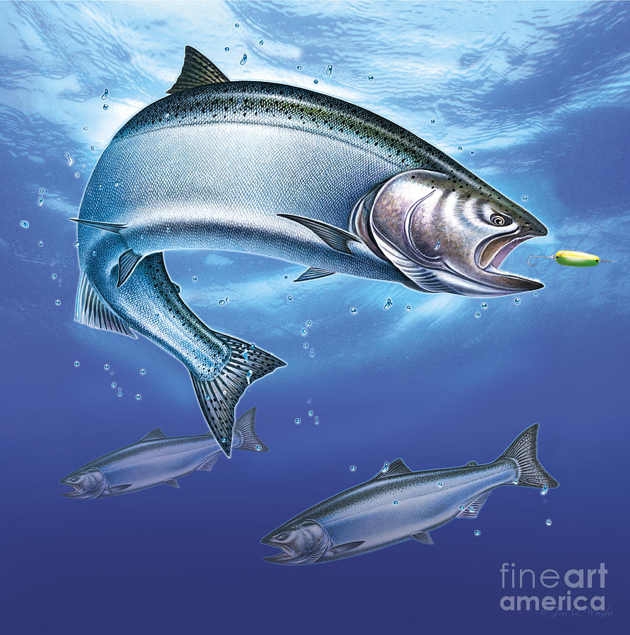 Fish Painting - Salmon  by JQ Licensing