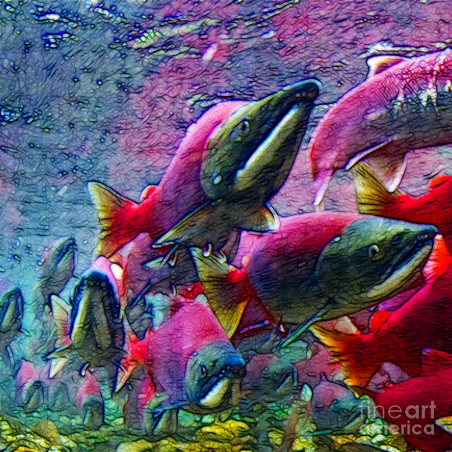 Big Fish Photograph - Salmon Run - Square - 2013-0103 by Wingsdomain Art and Photography