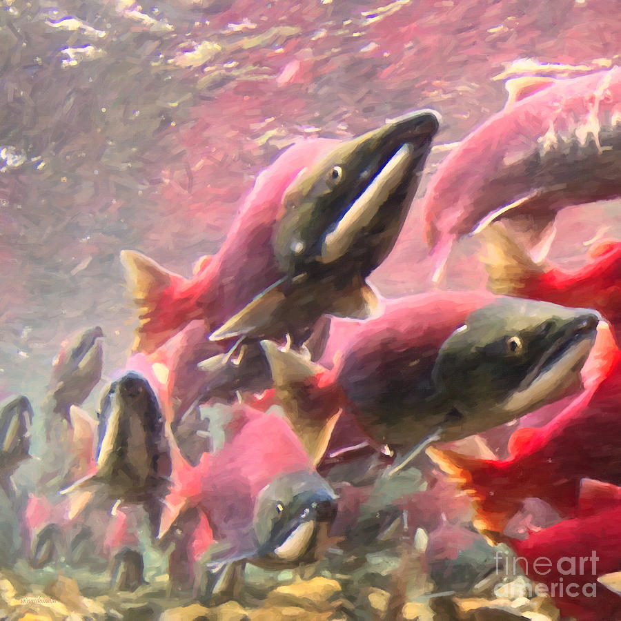 Big Fish Photograph - Salmon Run - Square - Painterly - 2013-0103 by Wingsdomain Art and Photography