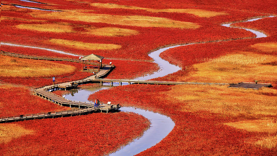 Autumn Photograph - Salt Pond by Tiger Seo