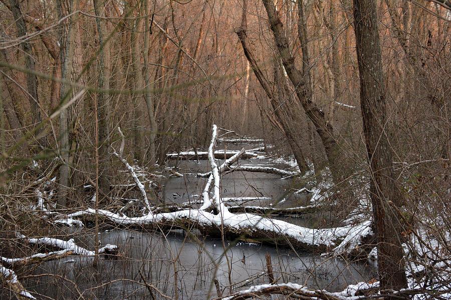 Logs Photograph - Salty Logs  by Bill Helman