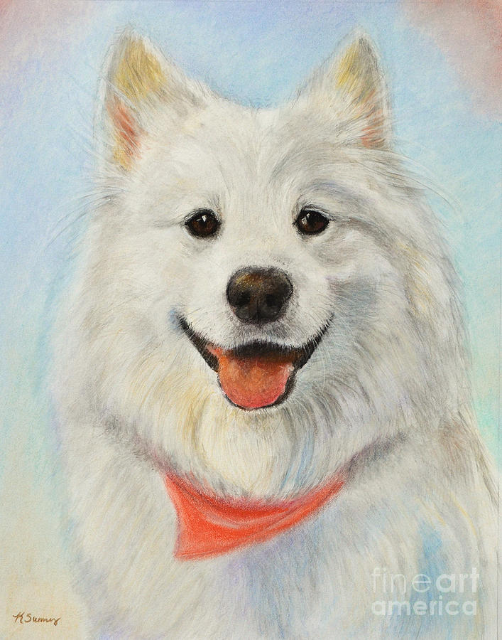 Samoyed Painting Painting By Kate Sumners